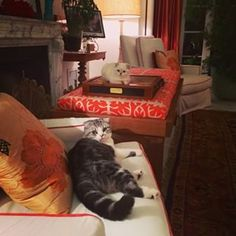 Taylor Swift's Scottish Folds, Meredith Grey (front) and Olivia Benson (back): | Community Post: 28 Celebrities' Pets Guaranteed To Melt Your Tiny, Fragile Heart