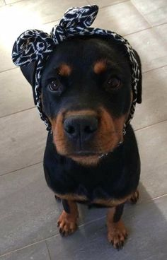 Puppies meme - For the cutest apparel & accessories w FREE SHIPPING go to www.CuteFTW.com #Rottweiler