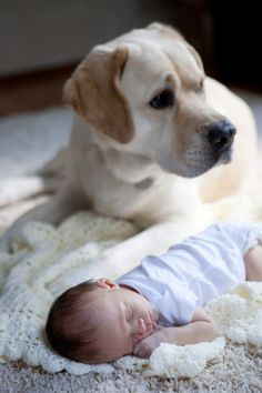Capturing the essence of loyalty and friendship here. The dog will be this baby's best friend and protect him for the rest of his canine life.