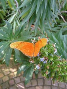 Qual menino sonhador /eu fico às vezes pensando /que a borboleta é uma flor /que gosta de sair voando.    (Soares da Cunha, poeta brasileiro, 1921-2011)
