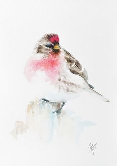 Buy Redpoll, Watercolour by Andrzej Rabiega on Artfinder. Discover thousands of other original paintings, prints, sculptures and photography from independent artists.