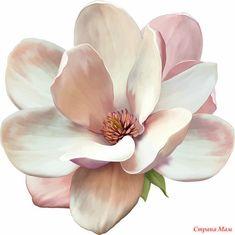 Цветы на белом фоне для творчества