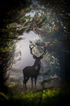 wonderous-world:  Red Deer Stag by Dan Ravnborg