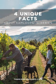 Kamloops is one of the northernmost grape growing areas with four wineries, six vineyards, and 120 acres under vine. Discover these 4 hidden gems and little known facts about them. Cider Making, Unique Facts, Growing Grapes, Unique Recipes, Wineries, Acre, Vines, Gems, Travel