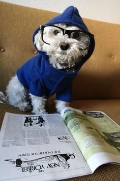 Dog pretending to read....