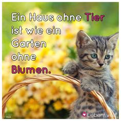 Animals And Pets, Cute Animals, German Language, Beautiful Soul, Cat Life, Kittens, Dogs, Instagram, Drawing
