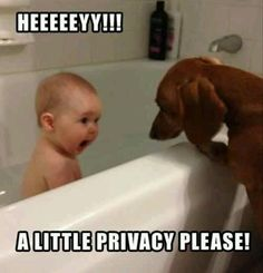 More than likely this will be Willow. In fact she'll probably climb right in the tub too!