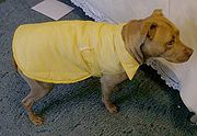 Free sewing patterns for dog coats   weather-resistant-coat-