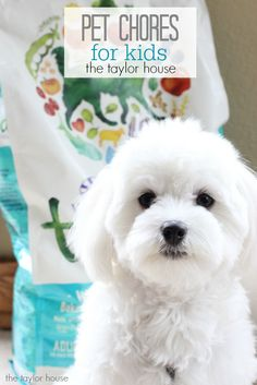 Pet Chores for kids