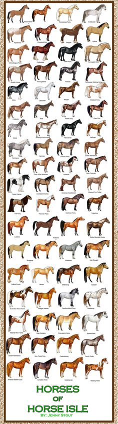 Heres ALL the horses so far in Horse Isle O_O wow I had no idea how many I did. They all go in order of when they were done.(except the Akhal-Teke was the first but I redid it later. Both versions ...