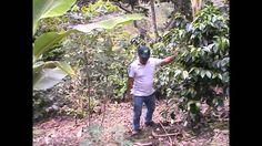 Dies ein kleiner Clip über die Reise nach Ecuador von Pingo (quijote-Kaffee Hamburg) und mir (Nadine, Five Roasters Berlin) im August 2014. Einen ausführlichen Reisebericht findest du unter: https://www.fiveroasters.de/blog/ecuador-august-2014/