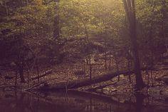 Longhorn State Park near Nashville, TN.