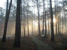 Much of the Great Dismal Swamp (pictured) is impenetrable by horse or canoe making it the perfect hideout for runaway slaves