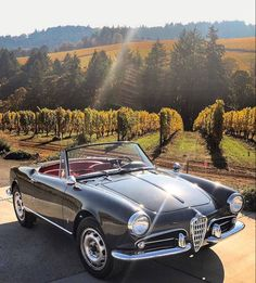 Alfa Romeo Giulietta Spider, Alfa Romeo Spider, Alfa Romeo Giulia, Ferrari 458, Lamborghini Aventador, Maserati, Ford Galaxie, Carrera, Alpha Romeo