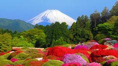 Mt. Fuji from Hotel de Yama garden on the shore of Lake Ashi