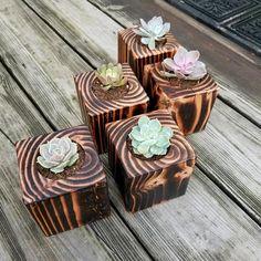 Succulent Planter set of 3 cactus planter indoor plants