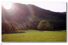 Bieszczady   Bandrów   Prawie jak olśnienie z nieba   Leśne Echo   Agroturystyka   Noclegi w Bieszczadach   Optimex pozycjonowanie   Optimex reklama w internecie    Henry Cudzilo   photo   foto