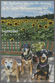 Free printable or downloadable desktop September Calendar | Dog Mom | Life with Dogs | Planner | Fall | Sunflowers