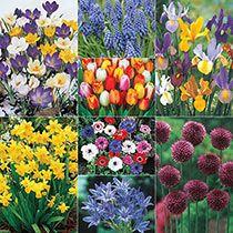 Rose Gardening For Beginners Classic Dutch Garden Collection Dutch Gardens, Flowers, Flower Garden, Gardening For Beginners, Container Gardening, Urban Garden, Garden Planning, Flower Garden Design, Garden Design