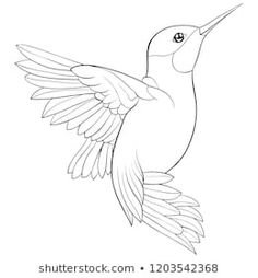 Find Adult Coloring Book Page Cute Hummingbird stock images in HD and millions of other royalty-free stock photos, illustrations and vectors in the Shutterstock collection. Bird Drawings, Art Drawings Sketches, Animal Drawings, Easy Drawings, Drawing Birds, Adult Coloring Book Pages, Coloring Books, Art Colibri, Hummingbird Drawing