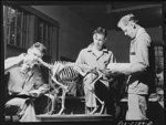 Students in anatomy class with skeleton of a dog. veterinary school at Iowa State College. Ames, Iowa