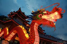 Chinese-Dragon-at-Dusk