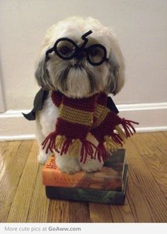 Happy Halloween pet edition