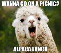 Obsessed with alpaca puns and idioms just not alpacas Memes Humor, Puns Jokes, Corny Jokes, Funny Puns, Dad Jokes, Funny Shit, Hilarious Memes, Funny Stuff, Cheesy Jokes