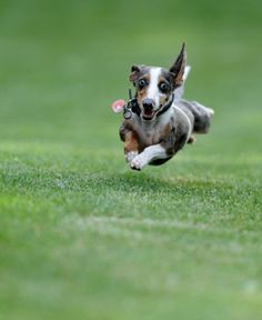 How To Get Your Dog To Come When Called - Nothing will panic you more than seeing your dog run away and not return when you call browse this page to learn How To Get Your Dog To Come When Called