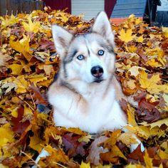 Dog fall