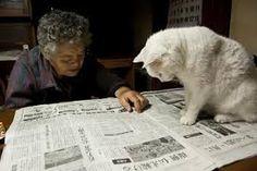 Afbeeldingsresultaat voor fukumaru cat