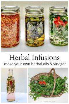 Herbal Infusions – How to Make Infused Oils and Vinegar for Cooking & Cosmetics Learn how to make herbal infusions by combining oils and vinegar with herbs from your backyards. Use them in cooking, cosmetics, and more. Flavored Oils, Infused Oils, Healing Herbs, Medicinal Plants, Wound Healing, Herb Recipes, Recipes With Herbs, Herbal Oil, Herbal Remedies
