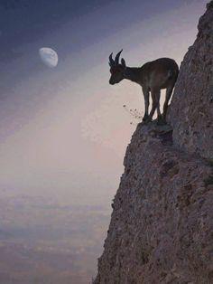 Mountain Goat on the Ledge (by Renato Lopez Baldo) Beautiful Creatures, Animals Beautiful, Cute Animals, Amazing Animal Pictures, Animal Pics, Tier Fotos, Mundo Animal, All Gods Creatures, Belle Photo