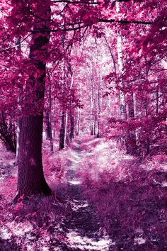 violet forest by Janine-Autumn on DeviantArt Beautiful Nature Wallpaper, Beautiful Landscapes, Beautiful Images, Beautiful Gardens, Photo Background Images, Photo Backgrounds, Nature Pictures, Colorful Pictures, Landscape Photography