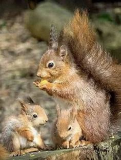 SQUIRREL FAMILY Cute Squirrel, Baby Squirrel, Squirrels, Animals And Pets, Baby Animals, Funny Animals, Animal Pictures, Cute Pictures, Wild Creatures
