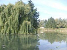 Location d'étangs Locations Moselle - leboncoin.fr