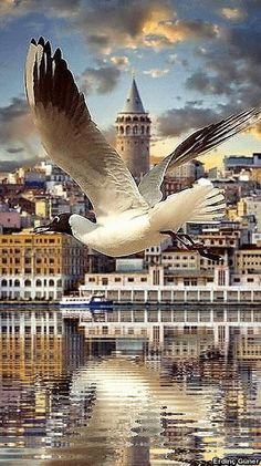 The wonders of the Nautical World Istanbul Travel, Blue Mosque, Turkey Travel, Best Places To Travel, Beautiful Places To Visit, Beautiful Birds, Go Kart, Cool Photos, City