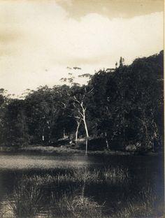 'Audley' - RAHS/Osborne Collection