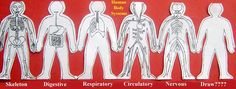 paper doll human body system