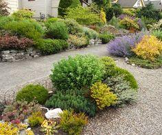 Star Juniper Companion Plants Blue Landscape Design Ideas