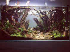 Nice Wild Jungle Style Aquarium Axolotl Tank, Chinese Water Dragon, Aquarium Landscape, Aquarium Ideas, Fish Tanks, Vivarium, Aquascaping, Scp, Layout Inspiration