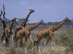 africa wild life   africa-wildlife