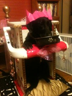 Bailey Chair (Princess Throne) built by my son for Leia after she was diagnosed with canine megaesophagus