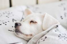♥ pup nap