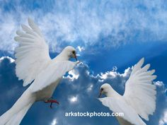 Beautiful blue cloudy sky by knowhimonline, via Flickr