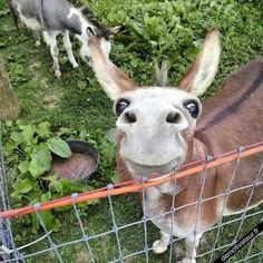 wow thats a cute one!!