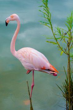 . Flamingo Painting, Flamingo Art, Pink Flamingos, Flamingo Pictures, Bird Pictures, Nature Pictures, Worlds Cutest Animals, Cute Animals, Night Sky Photos