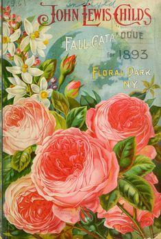 Child's 1893 catalogue