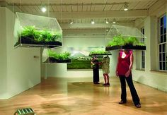 haha this is so awesome.  Hanging greenhouses you stick your head in. Vaughn Bell.