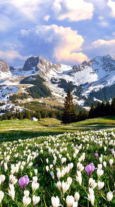 There aren't many places more beautiful than a swiss meadow on a spring day! #Switzerland